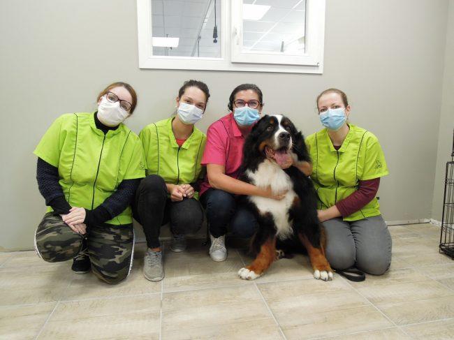 Après 20 ans de toiletteuse canine, elle déménage et ouvre un centre de formation (La Dépêche)